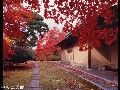 秋の風景・行事