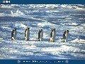 Frozen Seas