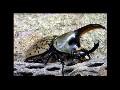 Beetles & Tarantulas