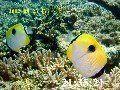 海底の風景 tdsd001