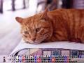 常時接続版 CAT
