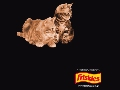 猫のスクリーンセーバー(1)